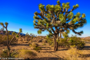1402-_joshua-tree-np-_038