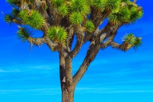 1402-_joshua-tree-np-_235
