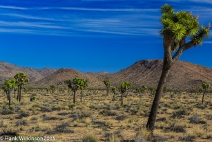 1402-_joshua-tree-np-_247