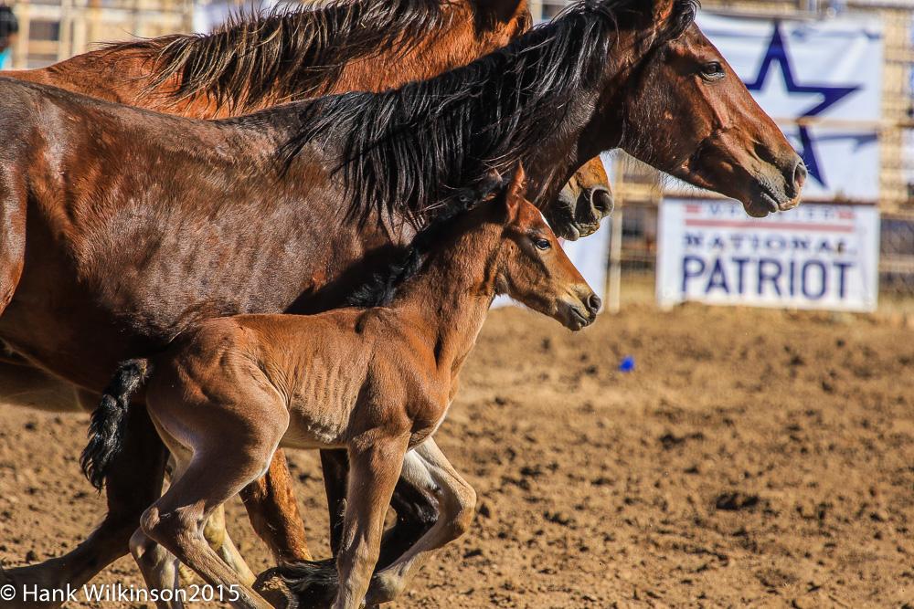 1503-_cc-rodeo-_3156